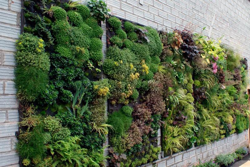 Озеленение стен