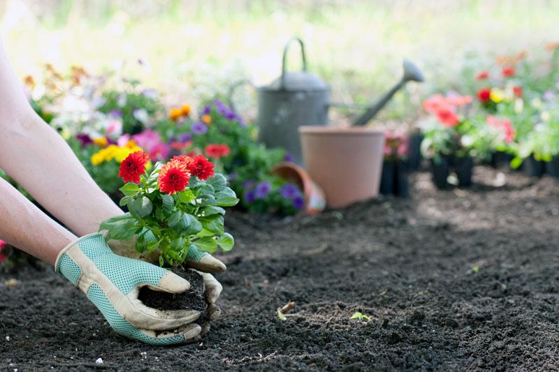 Высадка растений