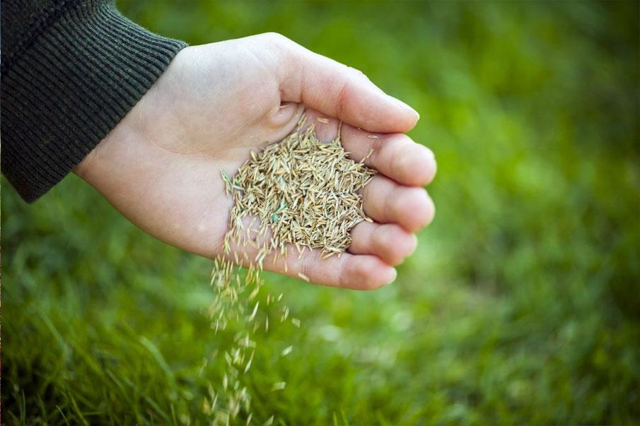Посев газона семена
