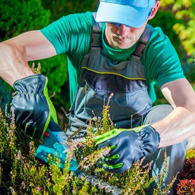 Здоровье и красота садового участка. 11 полезных советов!